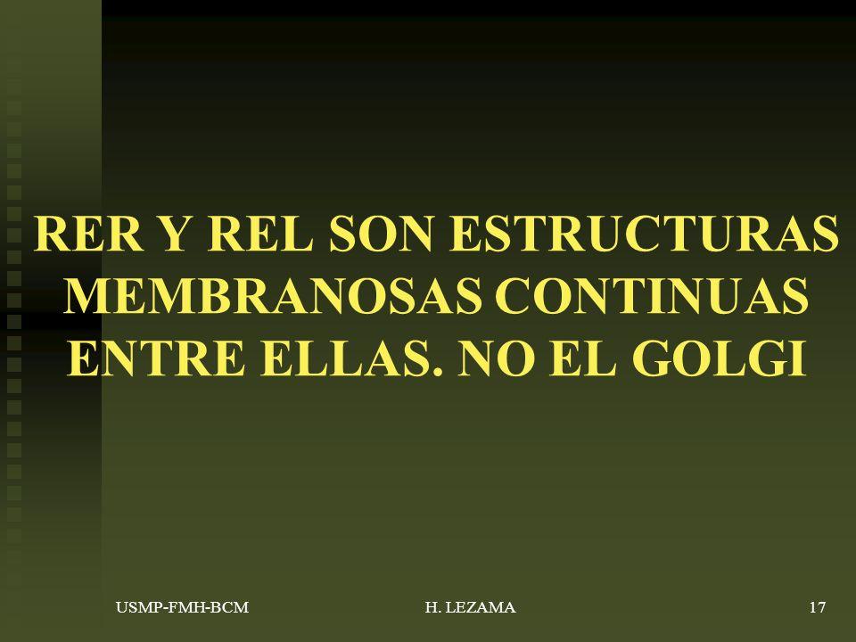 USMP-FMH-BCMH. LEZAMA17 RER Y REL SON ESTRUCTURAS MEMBRANOSAS CONTINUAS ENTRE ELLAS. NO EL GOLGI