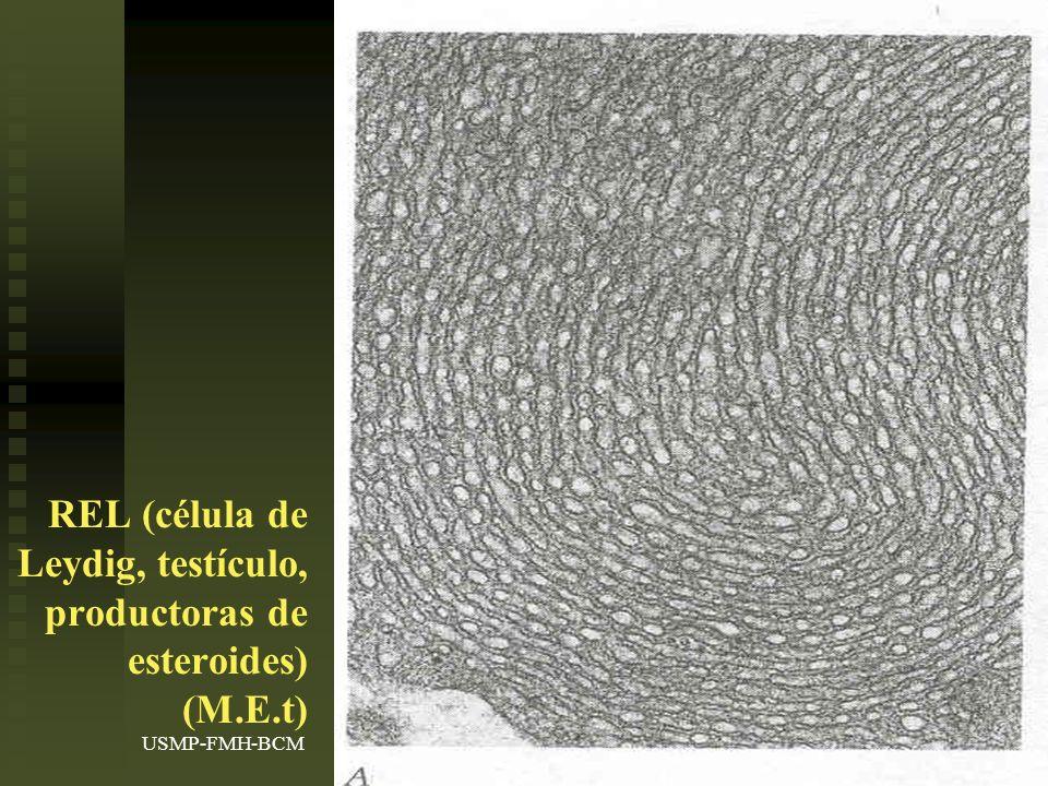 USMP-FMH-BCMH. LEZAMA18 REL (célula de Leydig, testículo, productoras de esteroides) (M.E.t)