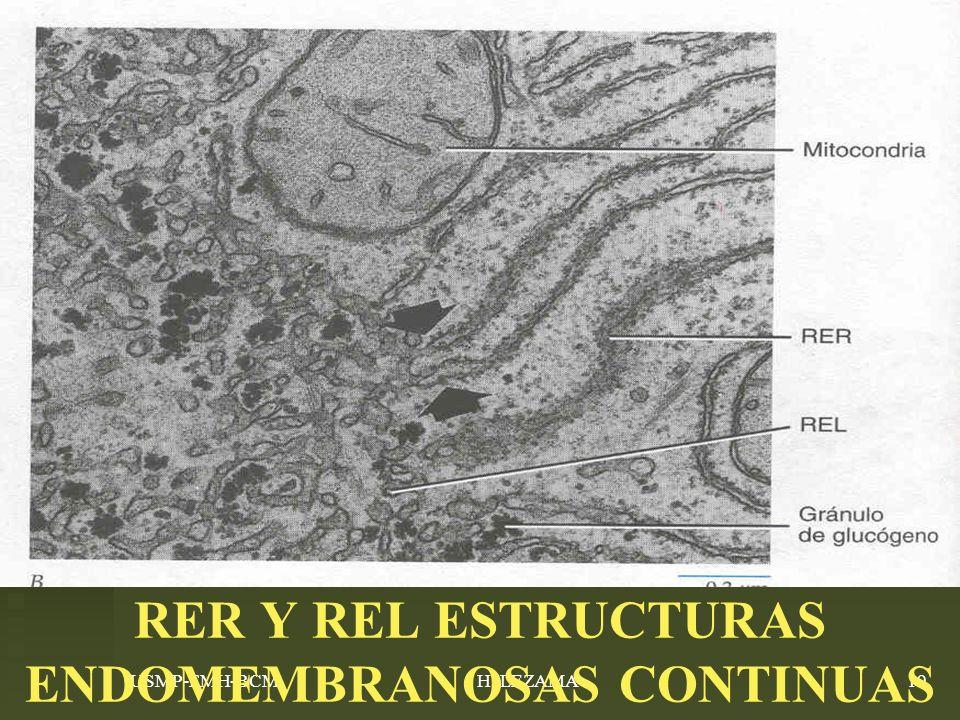 USMP-FMH-BCMH. LEZAMA19 RER Y REL ESTRUCTURAS ENDOMEMBRANOSAS CONTINUAS