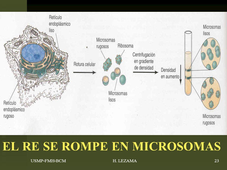 USMP-FMH-BCMH. LEZAMA23 EL RE SE ROMPE EN MICROSOMAS