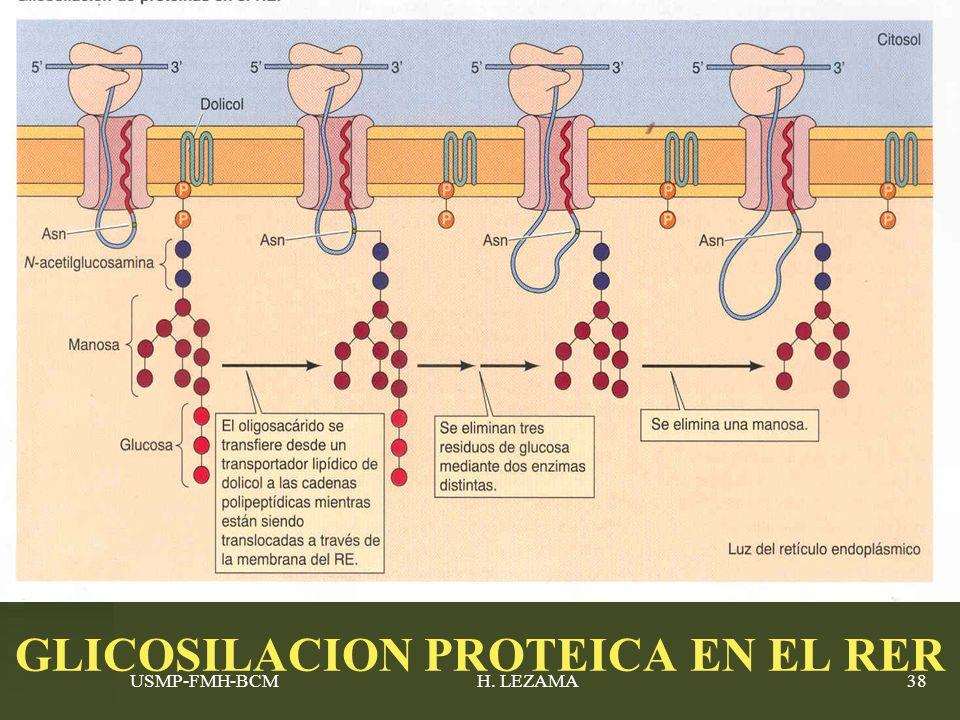 USMP-FMH-BCMH. LEZAMA38 GLICOSILACION PROTEICA EN EL RER
