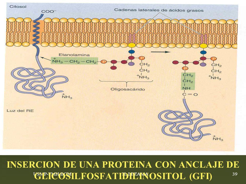USMP-FMH-BCMH. LEZAMA39 INSERCION DE UNA PROTEINA CON ANCLAJE DE GLICOSILFOSFATIDILINOSITOL (GFI)
