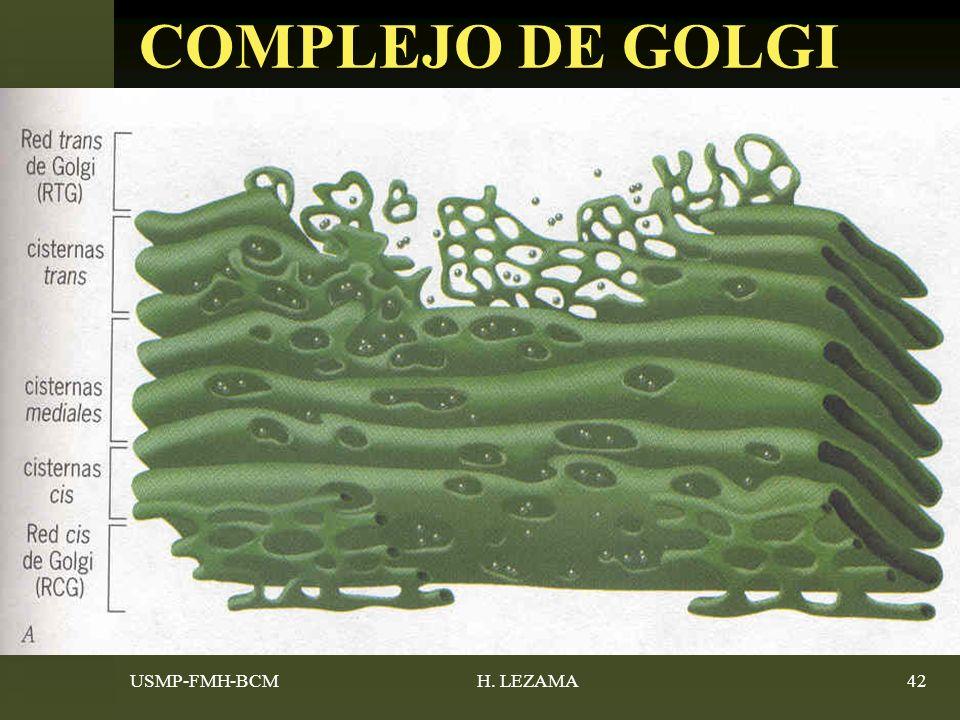 USMP-FMH-BCMH. LEZAMA42 COMPLEJO DE GOLGI
