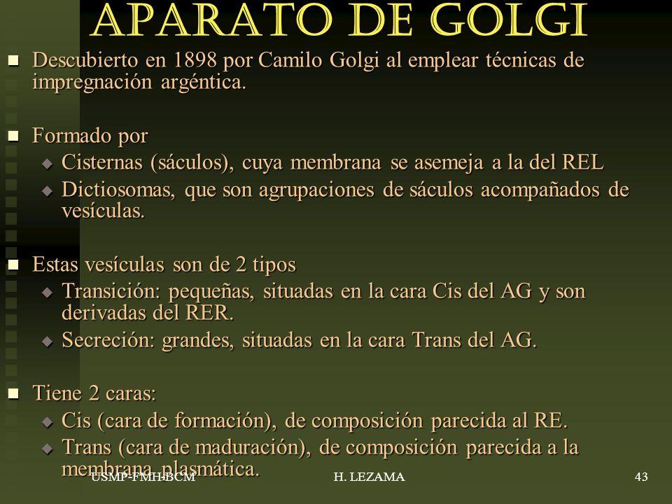 Aparato de Golgi Descubierto en 1898 por Camilo Golgi al emplear técnicas de impregnación argéntica.