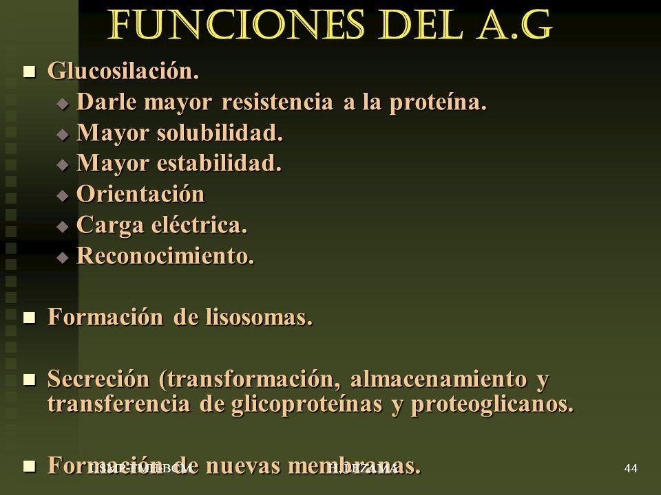 Funciones del A.G Glucosilación.Glucosilación. Darle mayor resistencia a la proteína.