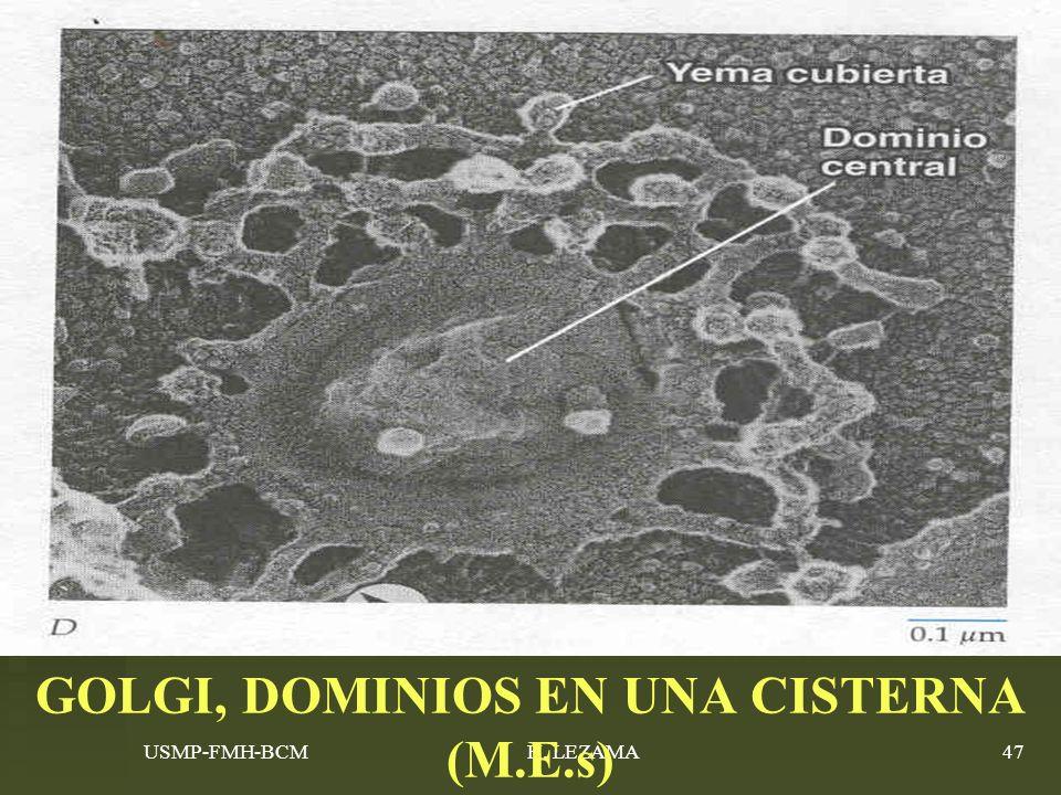 USMP-FMH-BCMH. LEZAMA47 GOLGI, DOMINIOS EN UNA CISTERNA (M.E.s)