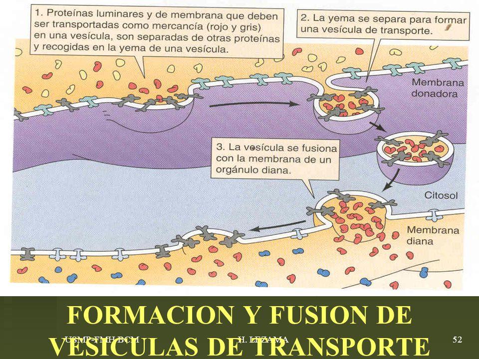 USMP-FMH-BCMH. LEZAMA52 FORMACION Y FUSION DE VESICULAS DE TRANSPORTE