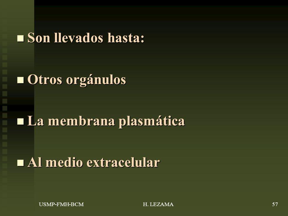 Son llevados hasta: Son llevados hasta: Otros orgánulos Otros orgánulos La membrana plasmática La membrana plasmática Al medio extracelular Al medio extracelular USMP-FMH-BCM57H.