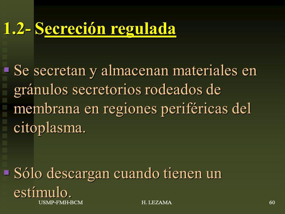 1.2- Secreción regulada Se secretan y almacenan materiales en gránulos secretorios rodeados de membrana en regiones periféricas del citoplasma.