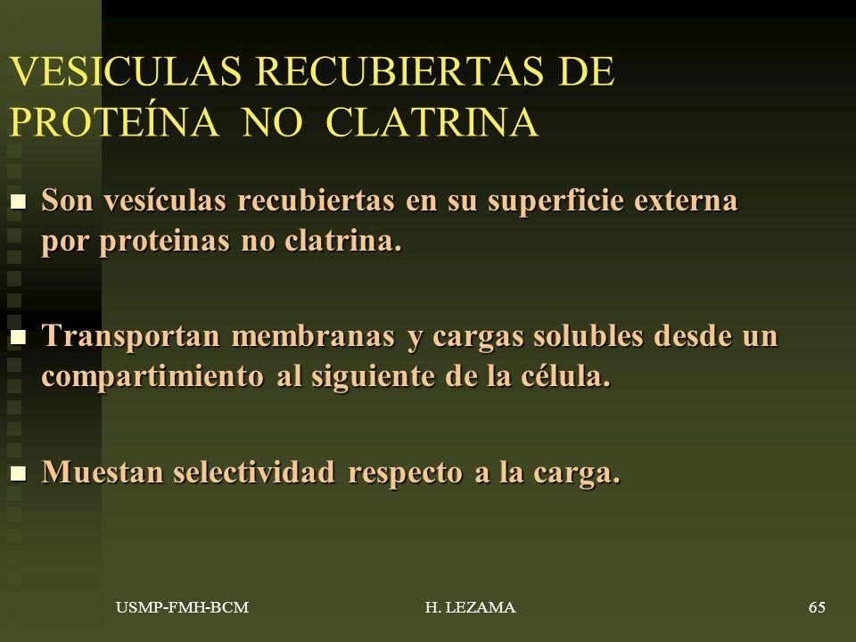 VESICULAS RECUBIERTAS DE PROTEÍNA NO CLATRINA Son vesículas recubiertas en su superficie externa por proteinas no clatrina.
