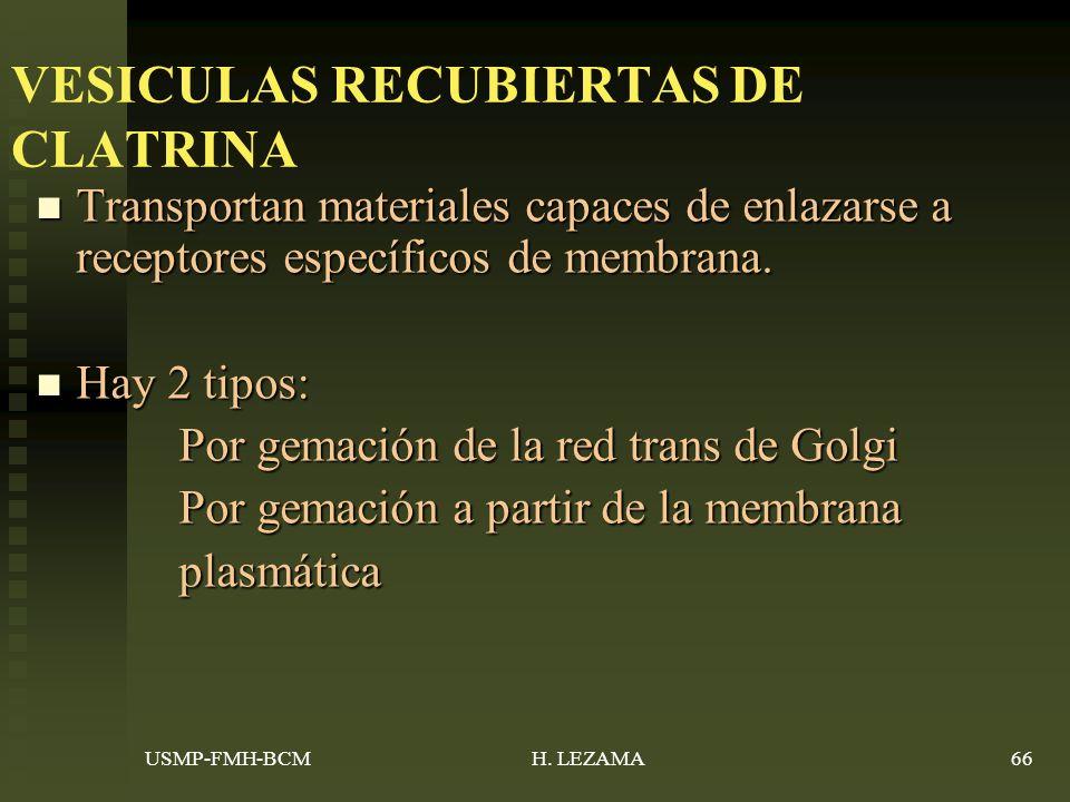 VESICULAS RECUBIERTAS DE CLATRINA Transportan materiales capaces de enlazarse a receptores específicos de membrana.