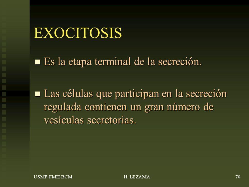 EXOCITOSIS Es la etapa terminal de la secreción.Es la etapa terminal de la secreción.