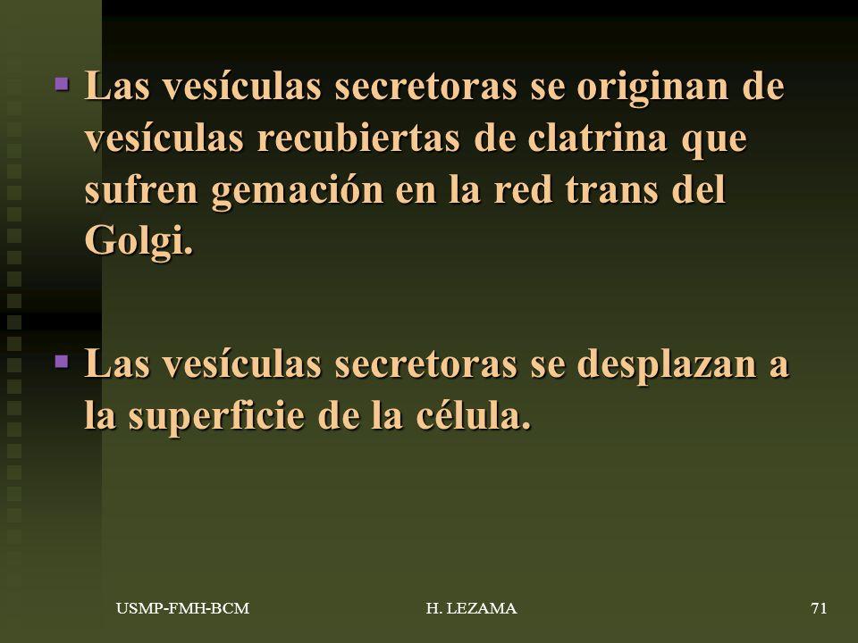 Las vesículas secretoras se originan de vesículas recubiertas de clatrina que sufren gemación en la red trans del Golgi.