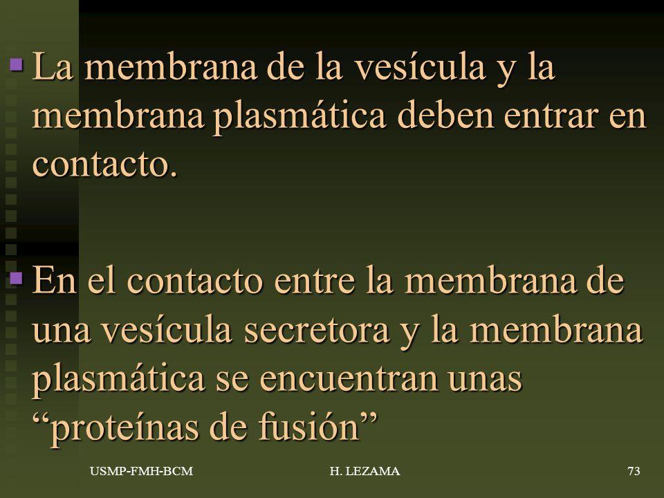La membrana de la vesícula y la membrana plasmática deben entrar en contacto.