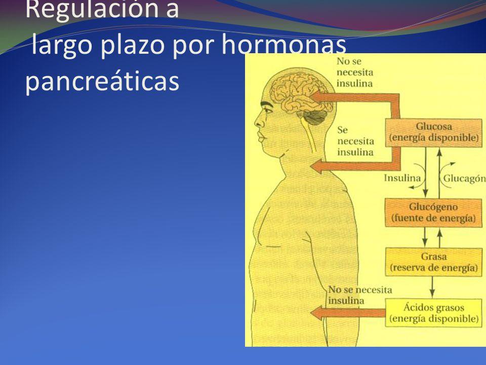 Regulación a largo plazo por hormonas pancreáticas