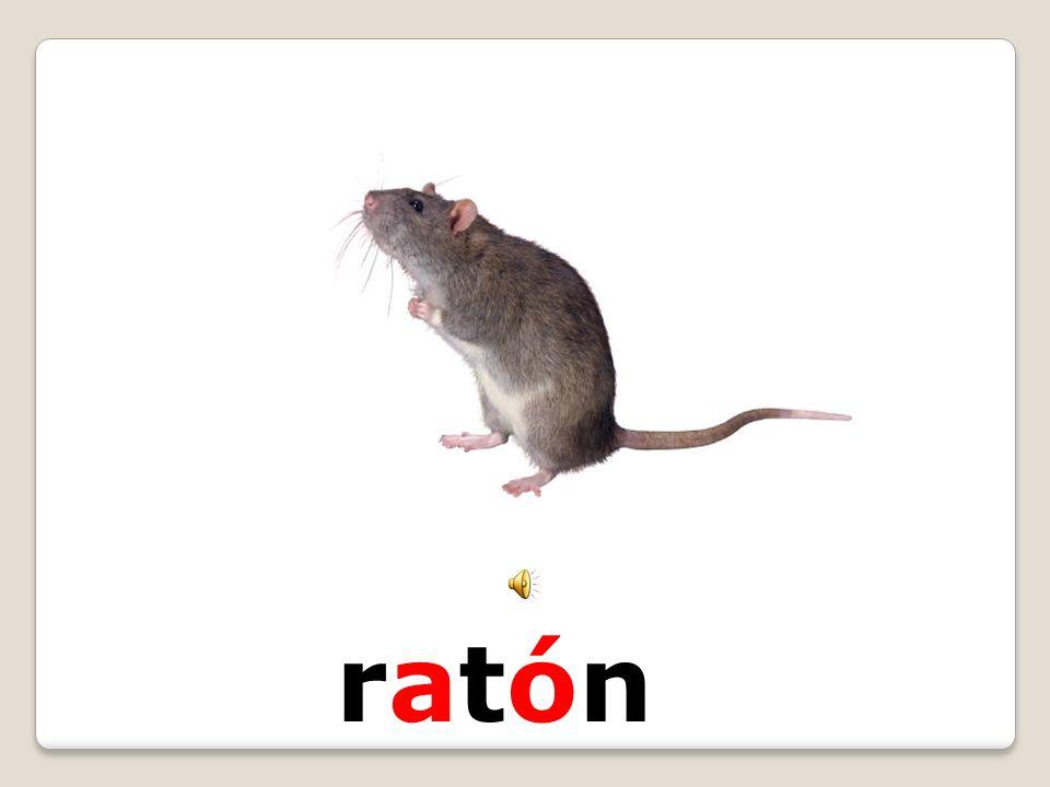 ratónratón