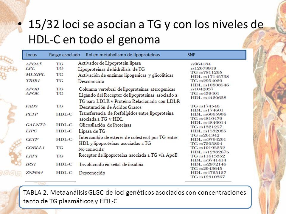 15/32 loci se asocian a TG y con los niveles de HDL-C en todo el genoma TABLA 2.
