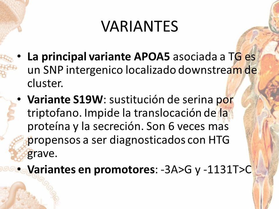 VARIANTES La principal variante APOA5 asociada a TG es un SNP intergenico localizado downstream de cluster.