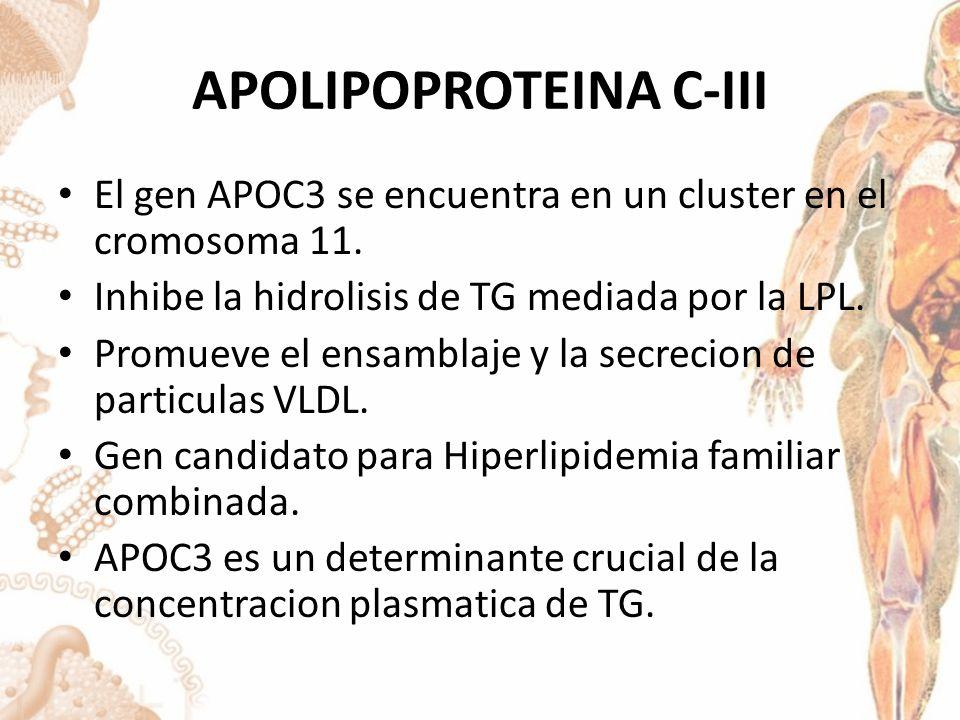APOLIPOPROTEINA C-III El gen APOC3 se encuentra en un cluster en el cromosoma 11.