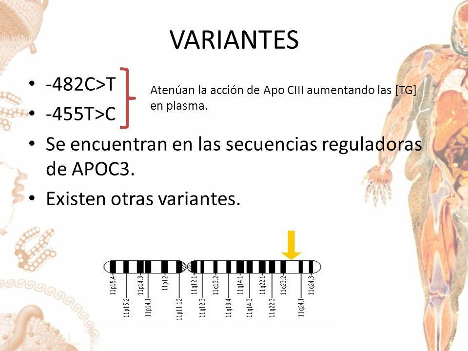 VARIANTES -482C>T -455T>C Se encuentran en las secuencias reguladoras de APOC3.