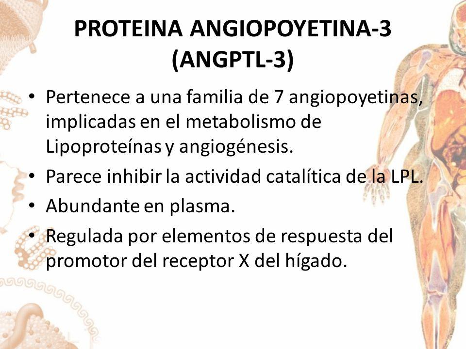 PROTEINA ANGIOPOYETINA-3 (ANGPTL-3) Pertenece a una familia de 7 angiopoyetinas, implicadas en el metabolismo de Lipoproteínas y angiogénesis.