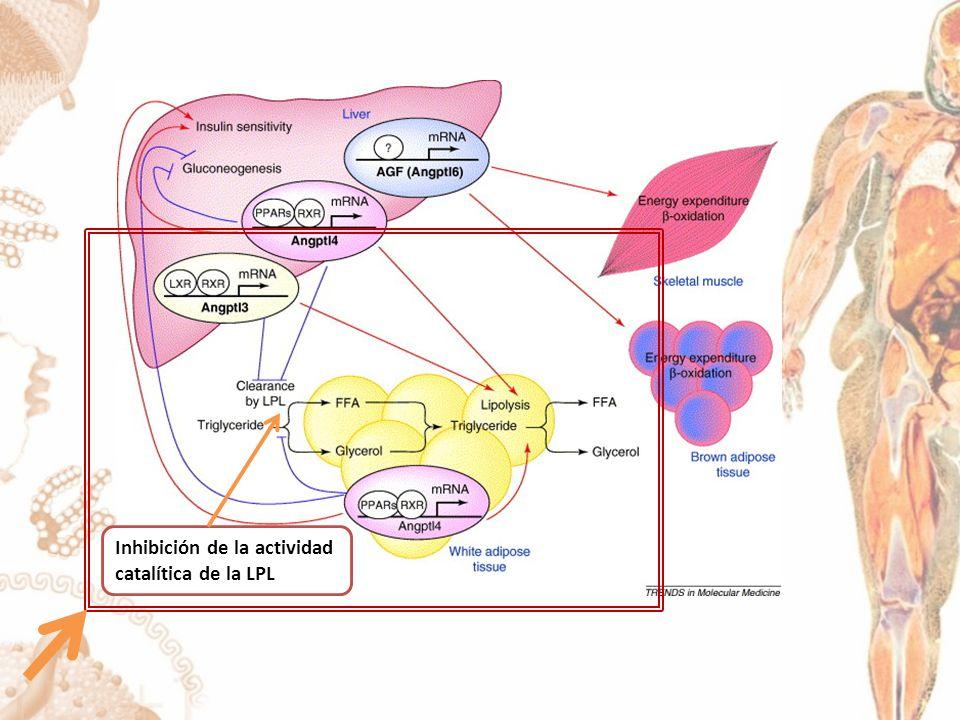 Inhibición de la actividad catalítica de la LPL