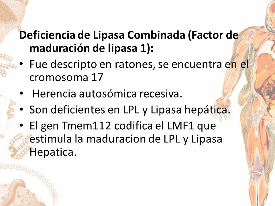 Deficiencia de Lipasa Combinada (Factor de maduración de lipasa 1): Fue descripto en ratones, se encuentra en el cromosoma 17 Herencia autosómica recesiva.