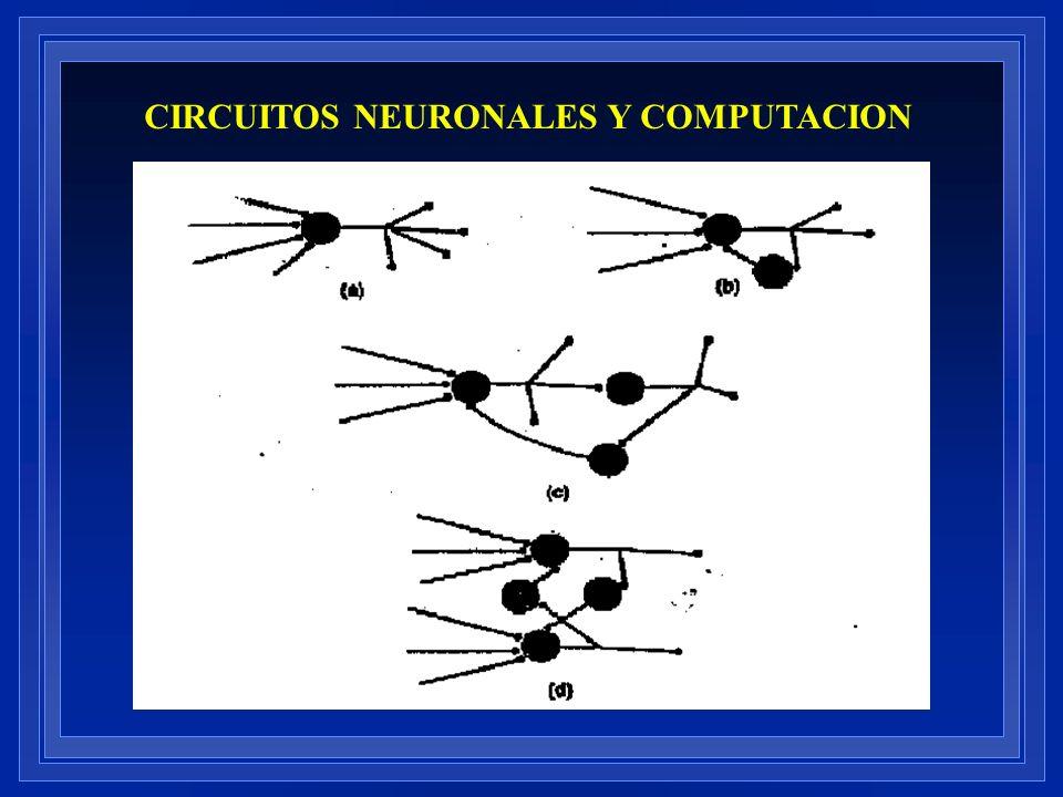 CIRCUITOS NEURONALES Y COMPUTACION