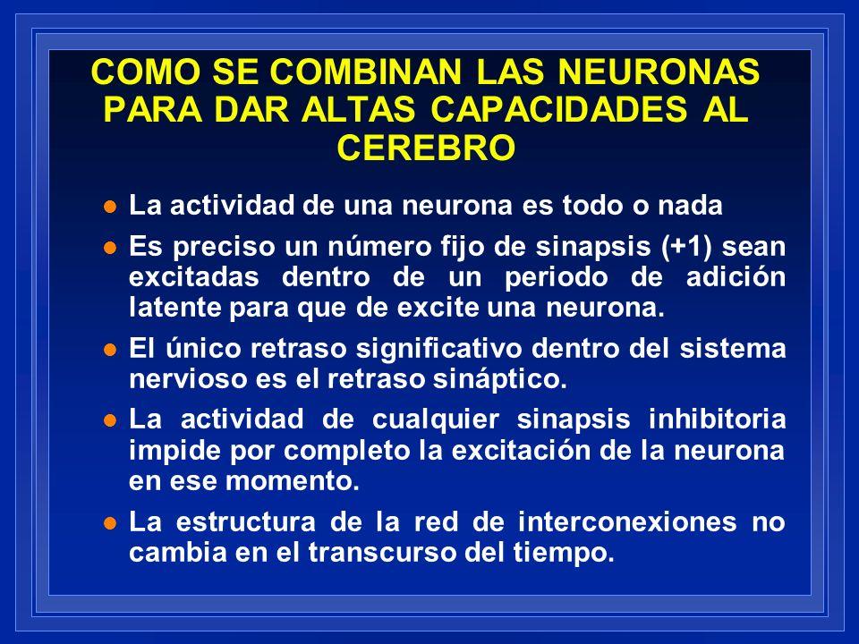 COMO SE COMBINAN LAS NEURONAS PARA DAR ALTAS CAPACIDADES AL CEREBRO l La actividad de una neurona es todo o nada l Es preciso un número fijo de sinaps