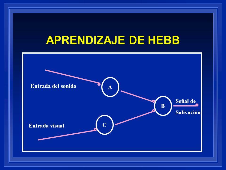 APRENDIZAJE DE HEBB B A C Entrada del sonido Entrada visual Señal de Salivación