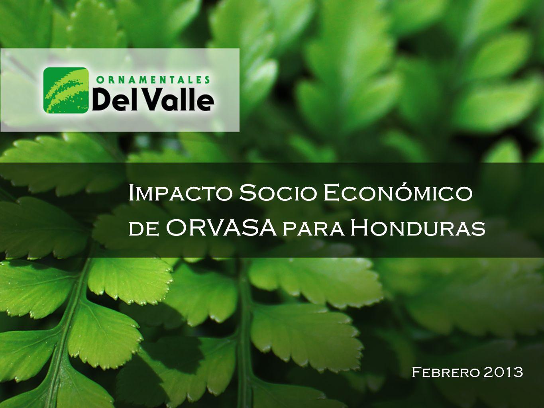 Impacto Socio Económico de ORVASA para Honduras Febrero 2013