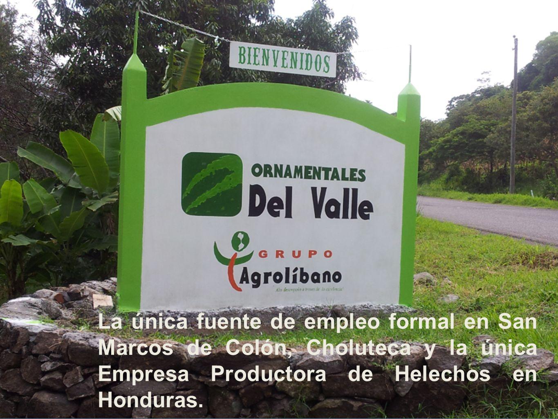 La única fuente de empleo formal en San Marcos de Colón, Choluteca y la única Empresa Productora de Helechos en Honduras.