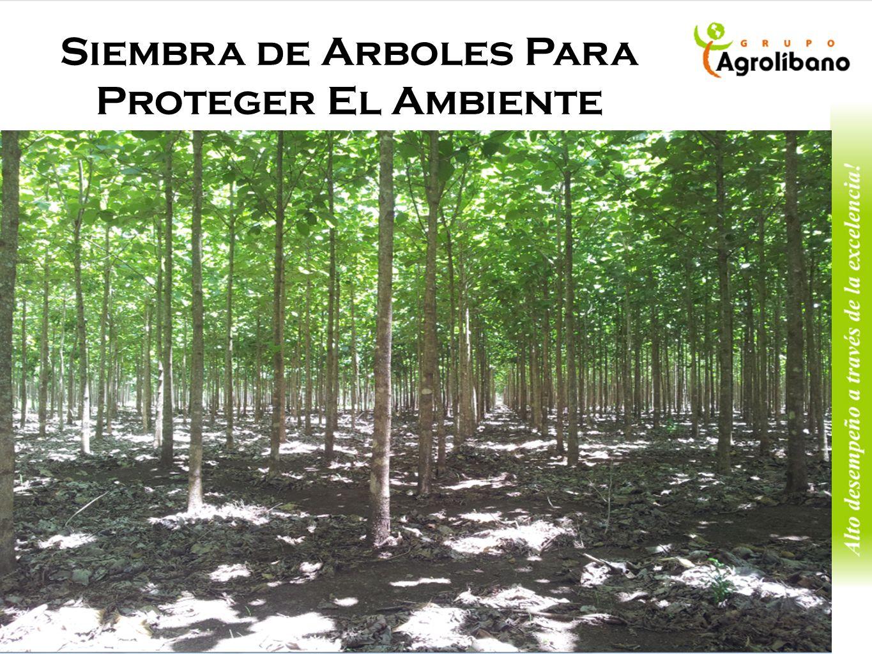 Siembra de Arboles Para Proteger El Ambiente
