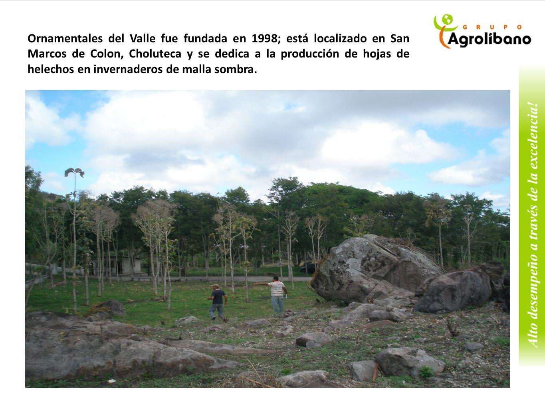 Retos del Negocio 1.Control de enfermedades fungosas como la antracnosis que nos ha ocasionado fuertes perdidas de producción y económicas en el 2009, 2010 y 2011, además esta enfermedad a reducido el número de productores de Guatemala y Costa Rica.