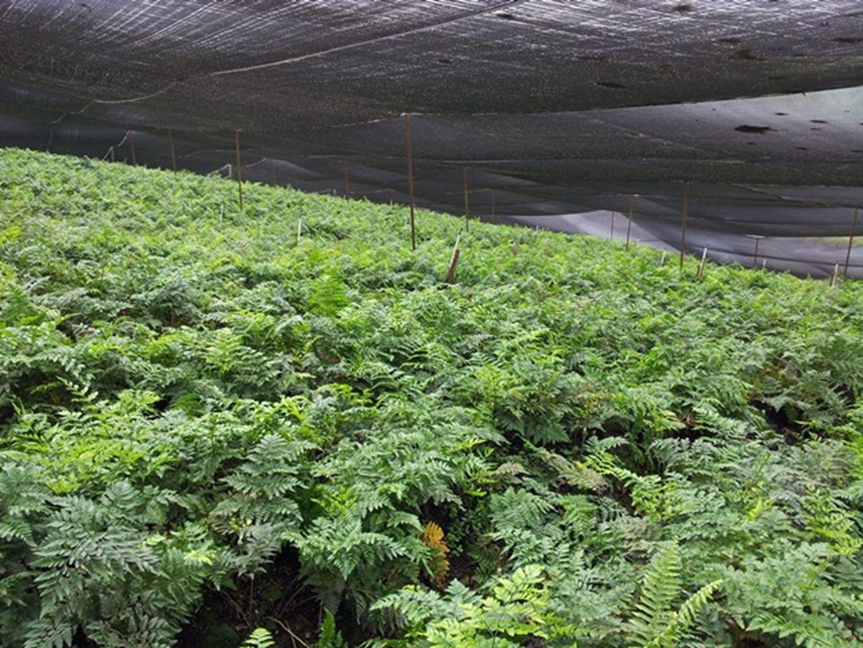 Inversiones en Medio Ambiente Cosecha de Agua de lluvia