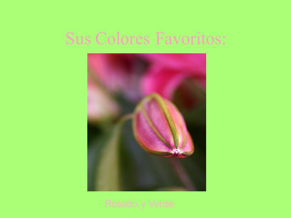 Sus Colores Favoritos: Rosado y Verde