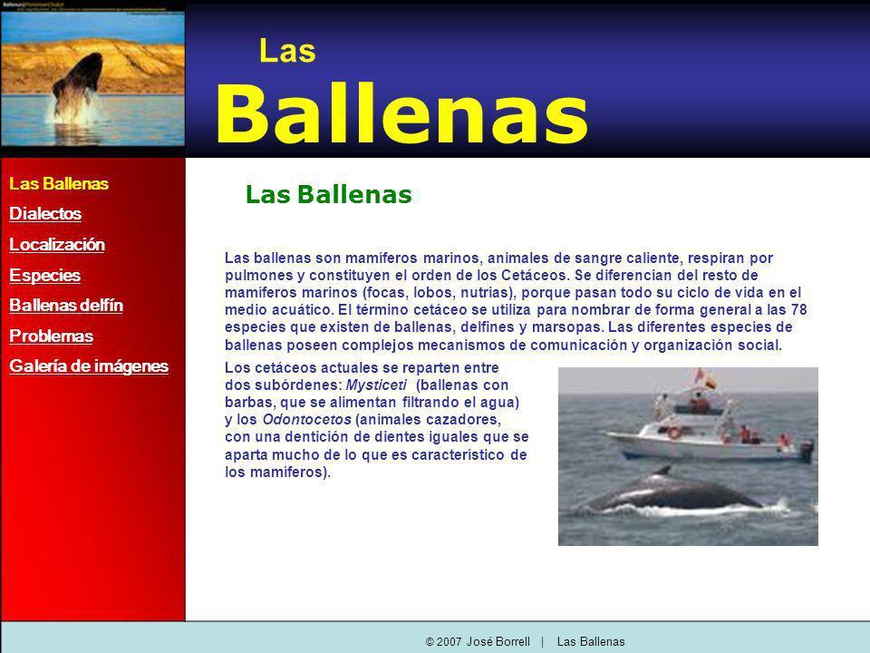 © 2007 José Borrell   Las Ballenas Las Ballenas Las Ballenas Las ballenas son mamíferos marinos, animales de sangre caliente, respiran por pulmones y constituyen el orden de los Cetáceos.