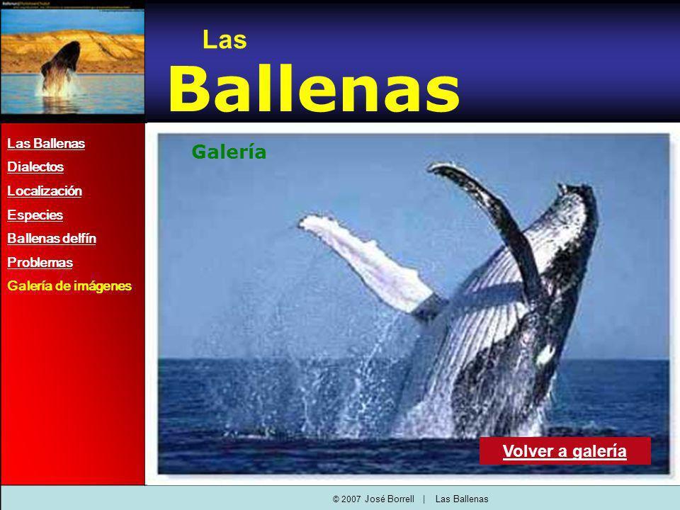 Las Ballenas Dialectos Localización Especies Ballenas delfín Problemas Galería de imágenes Las Ballenas Volver a galería Galería © 2007 José Borrell   Las Ballenas