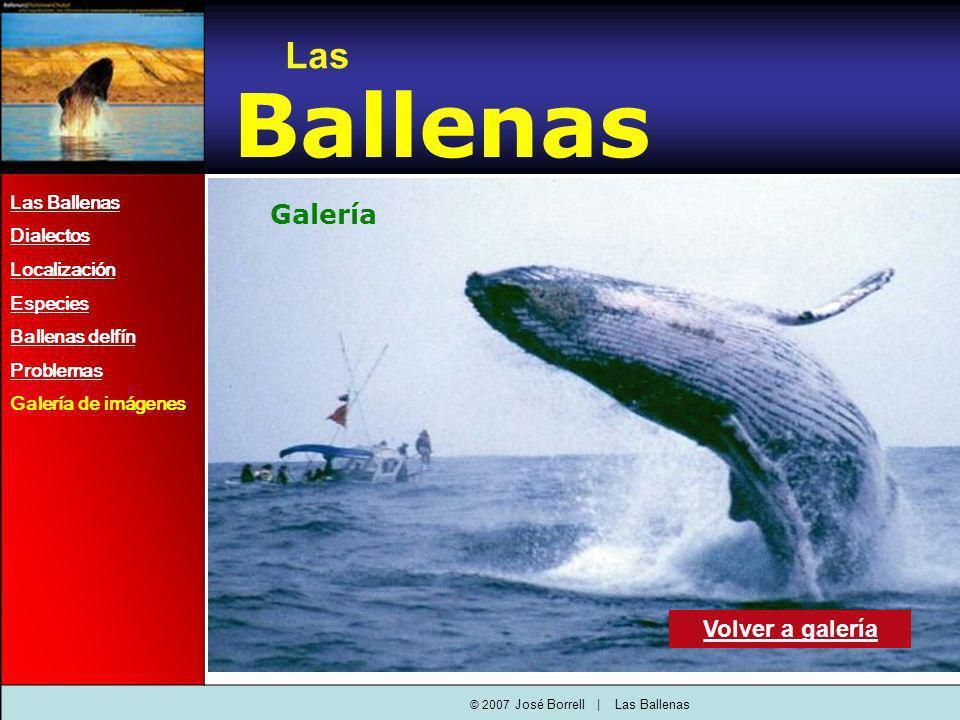 Las Ballenas Dialectos Localización Especies Ballenas delfín Problemas Galería de imágenes Las Ballenas Galería Volver a galería © 2007 José Borrell   Las Ballenas