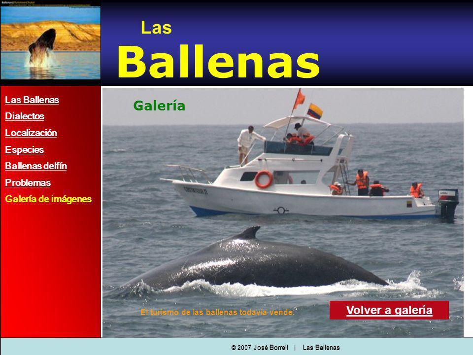 Las Ballenas Dialectos Localización Especies Ballenas delfín Problemas Galería de imágenes Las Ballenas Galería Volver a galería © 2007 José Borrell   Las Ballenas El turismo de las ballenas todavía vende.