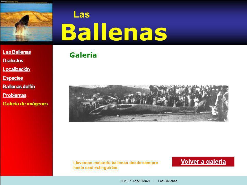 Galería Las Ballenas Dialectos Localización Especies Ballenas delfín Problemas Galería de imágenes Volver a galería Las Ballenas © 2007 José Borrell   Las Ballenas Llevamos matando ballenas desde siempre hasta casi extinguirlas.