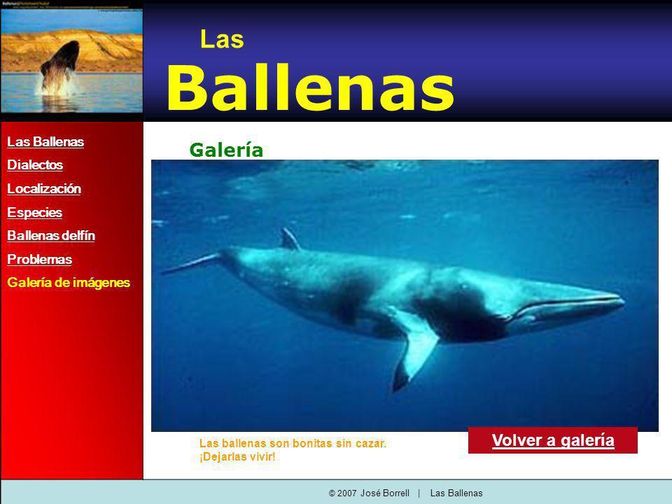 Las Ballenas Dialectos Localización Especies Ballenas delfín Problemas Galería de imágenes Las Ballenas Galería Volver a galería © 2007 José Borrell   Las Ballenas Las ballenas son bonitas sin cazar.
