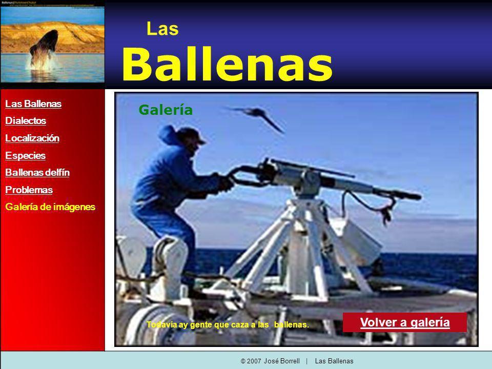 Las Ballenas Dialectos Localización Especies Ballenas delfín Problemas Galería de imágenes Las Ballenas Galería Volver a galería © 2007 José Borrell   Las Ballenas Todavía ay gente que caza a las ballenas.