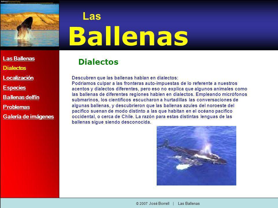 Dialectos Descubren que las ballenas hablan en dialectos: Podríamos culpar a las fronteras auto-impuestas de lo referente a nuestros acentos y dialectos diferentes, pero eso no explica que algunos animales como las ballenas de diferentes regiones hablen en dialectos.