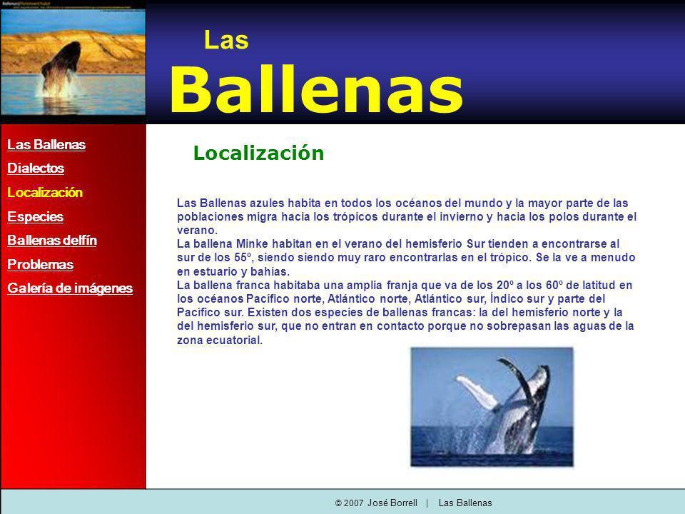 Localización Las Ballenas azules habita en todos los océanos del mundo y la mayor parte de las poblaciones migra hacia los trópicos durante el invierno y hacia los polos durante el verano.