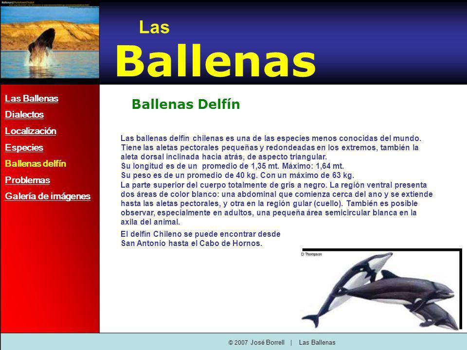 Ballenas Delfín Las ballenas delfín chilenas es una de las especies menos conocidas del mundo.