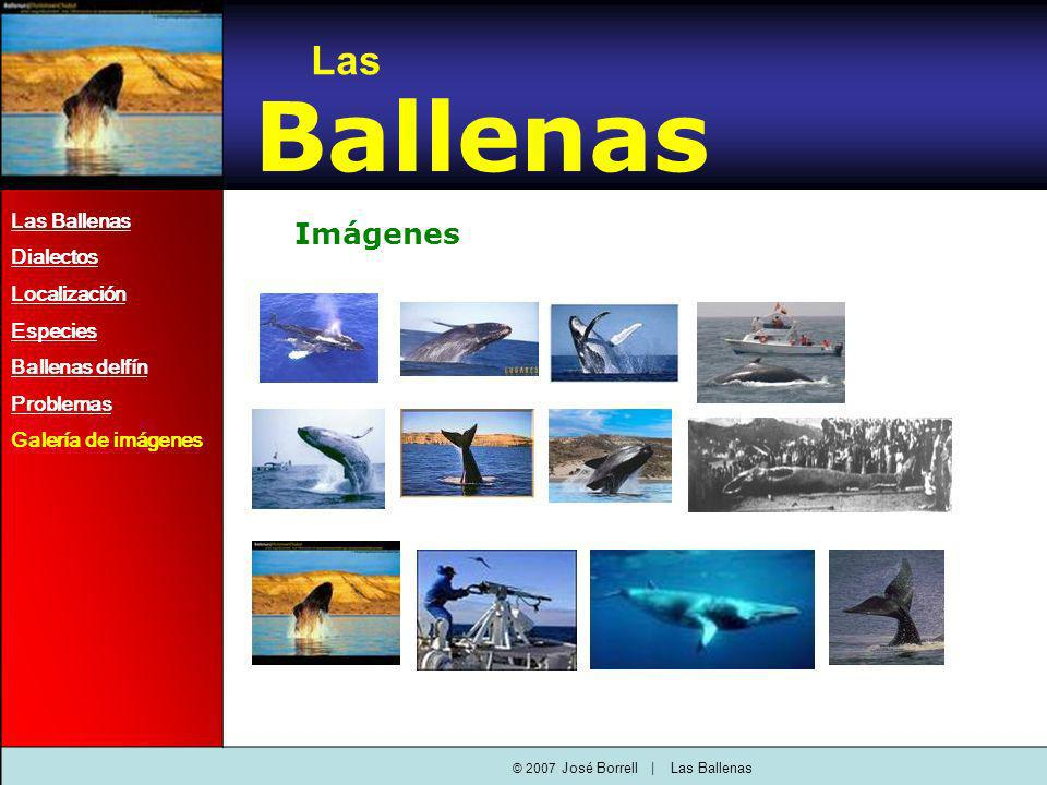 Imágenes Las Ballenas Dialectos Localización Especies Ballenas delfín Problemas Galería de imágenes Las Ballenas © 2007 José Borrell   Las Ballenas