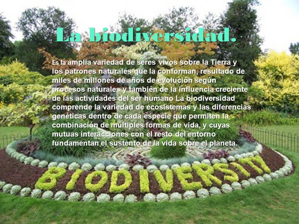 Importancia de la biodiversidad El valor esencial y fundamental de la biodiversidad reside en que es resultado de un proceso histórico natural.