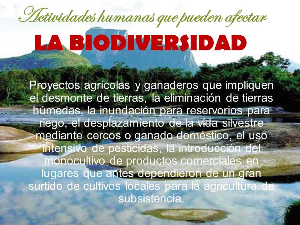 Actividades humanas que pueden afectar LA BIODIVERSIDAD Proyectos agrícolas y ganaderos que impliquen el desmonte de tierras, la eliminación de tierra