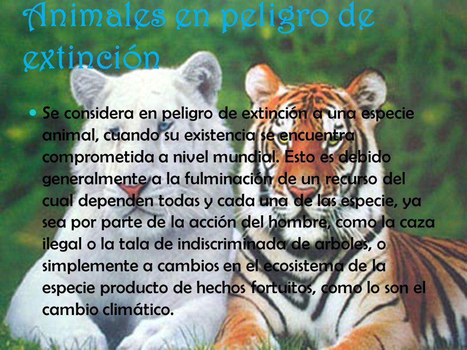 Animales en peligro de extinción Se considera en peligro de extinción a una especie animal, cuando su existencia se encuentra comprometida a nivel mun